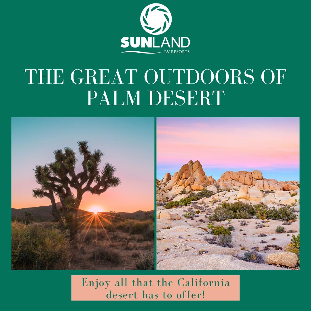 Palm Desert Blog